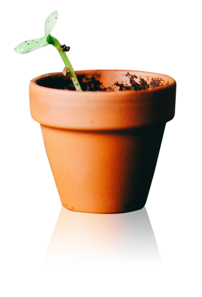 plant in a plant pot on transparent background